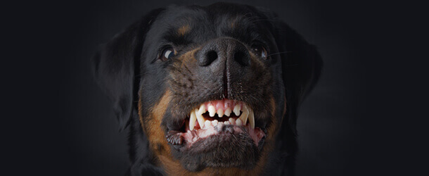 vicious dog bit personal injury lawyer